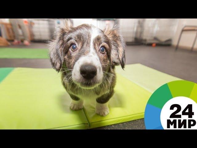 Спасение собак: зоозащитники требуют от корейцев отказа от традиций - МИР 24