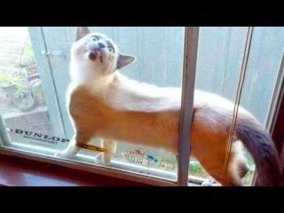 Приколы с котами и кошками — Смешные коты и кошки 2017 🐈 КОТЫ ПРИКОЛЫ 2017