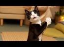 Смешные коты и другие животные 2017