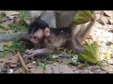 Newborn Baby monkey 3day - Want to be able to walk so lovely baby monkey , part 207