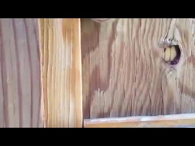 Scared birb