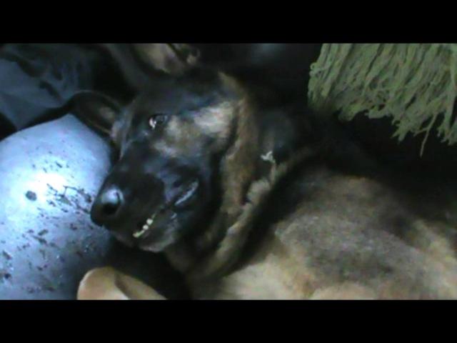 German Shepherd doesn't like bath time
