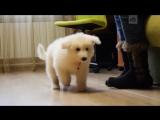 Путин подарил щенка школьнику из Ярославля