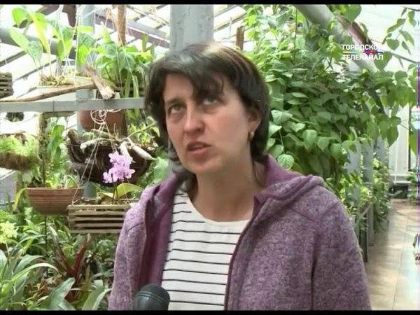 В ботаническом саду Ярославского педуниверситета завершился капремонт оранжерейного комплекса