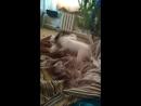 Собачьи бои. Запрещённое видео.