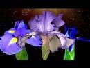 Волшебство цветов