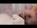ПРИКОЛЫ 2017 Сентябрь 140 Самые Смешные Видео с Животными Угарные Собаки и Кошк