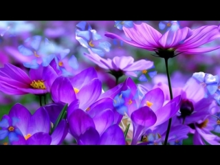 Leo Delibes - The Flower Duet (Lakme) - Best Of Classical