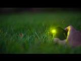 So ... Sometimes Fireflies Eat Other Fireflies ¦ Deep Look