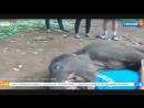 Слонёнок целуется