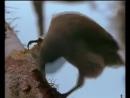 Разнообразие галапагосских вьюрков