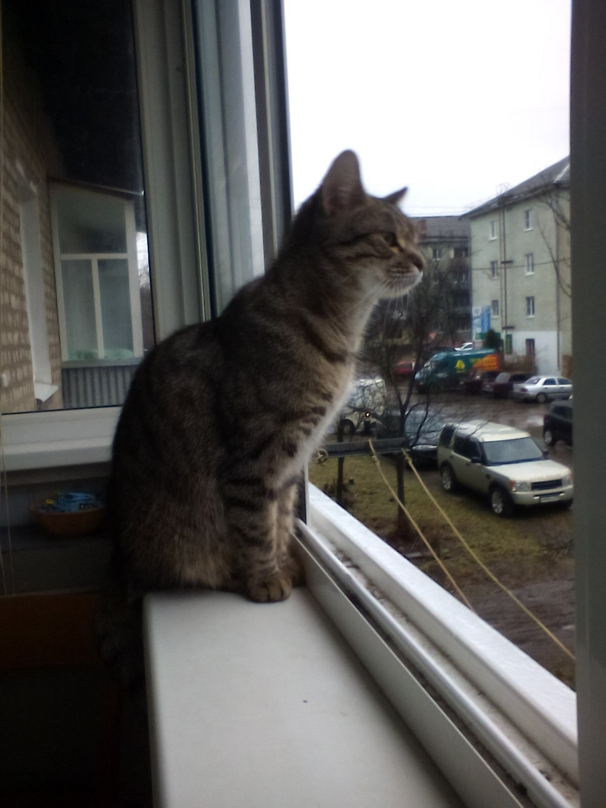 Срочно отдам в добрые руки молодую кошку, на улицу не выходила, жила в квартире.