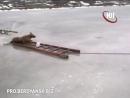 Бердянские смельчаки спасли собаку провалившуюся под лед