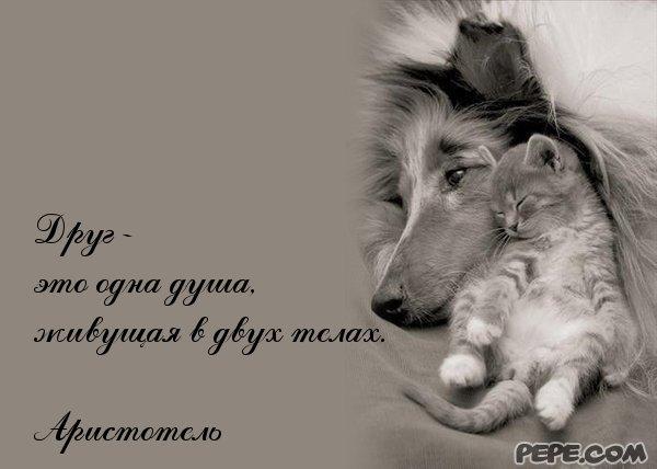 pp.userapi.com/c840532/v840532706/36087/GarDTEiJHKE.jpg