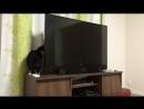 смешно про кота и телевизор