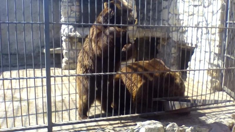 Зоопарк. Ведмеді
