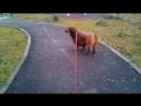 Ханни на прогулке