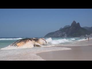 На пляже в Рио найден мертвый кит