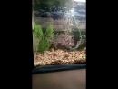 Смерть моей рыбки