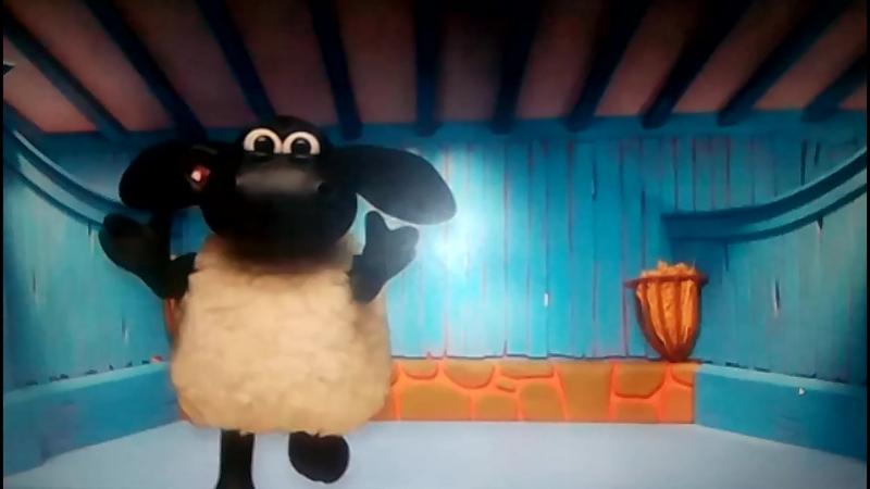 овца выглядывает из-за бутылки