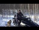 Загонная охота зимой на дикого кабана с собаками.