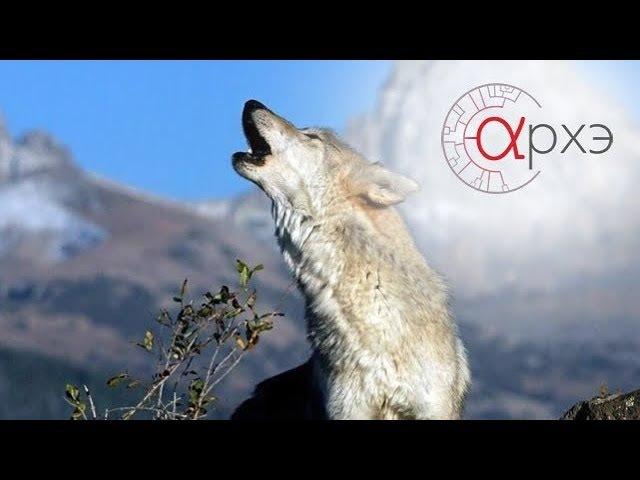 Ясон Бадридзе Человек в стае волков