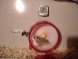 Hamster - highest speed #4GBeeline