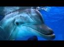 История дельфина 2 - Дублированный трейлер