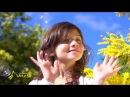 La Route du Mimosa, un voyage parfumé sur 130 km