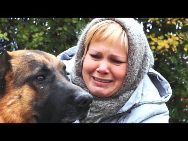 Одинокий Пёс Фильм