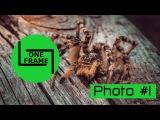 one frame - подборка фото | a selection of photos