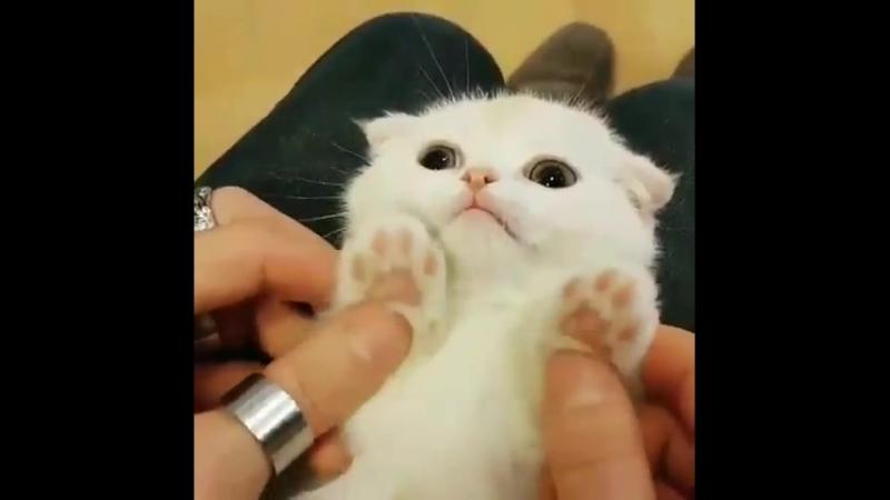 котик для кисы