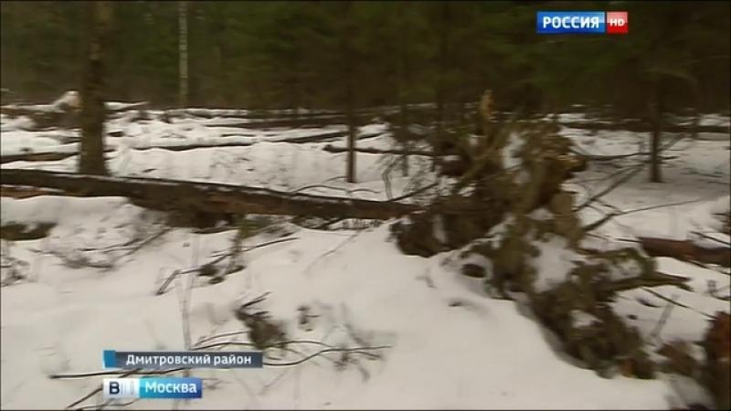 Вести-Москва • Заповедник под Дмитровом - под угрозой коттеджной оккупации