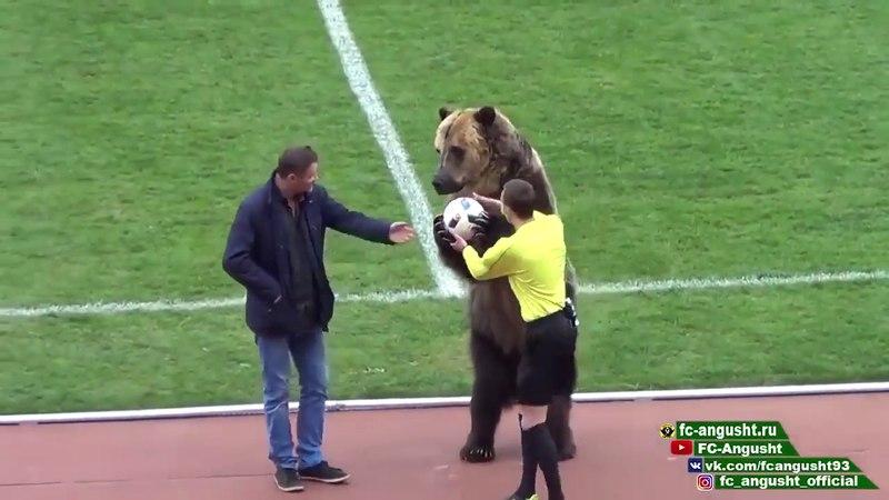 Russia: a bear do the opening between two 3rd division soccer teams » Freewka.com - Смотреть онлайн в хорощем качестве