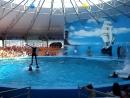 дельфинарий в Джубге