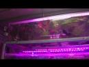 Выходной аквариумиста На птичку за растениями Открытие зоомагазина Биобокс mp4