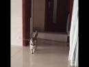 Кот, который сломал систему