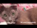 Смешные коты, приколы про животны