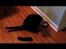 1 Cats Dislikes