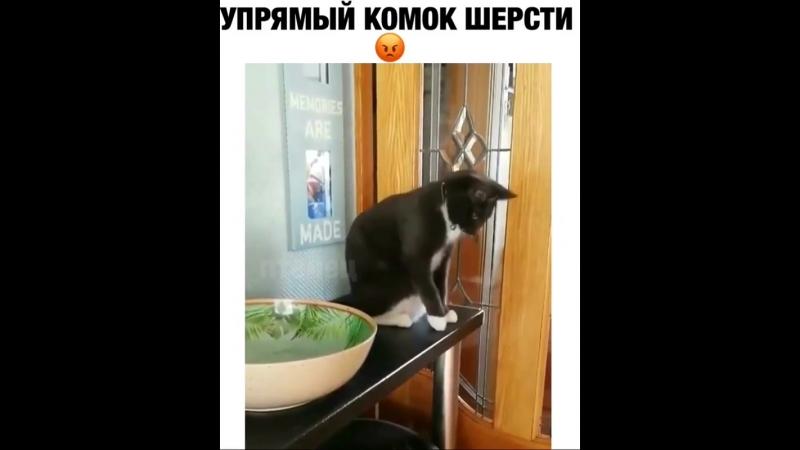 Когда все должно быть по-твоему и точка (хорошее настроение, юмор, кот, кошак, животное, разруха, обида, смешное видео, киса).
