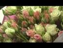 Букет из 51 кустовой бело - кремовой розы