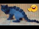 КотЗилла! Приколы с котами и кошками 7. Самые смешные видео с котиками, декабрь 2017!