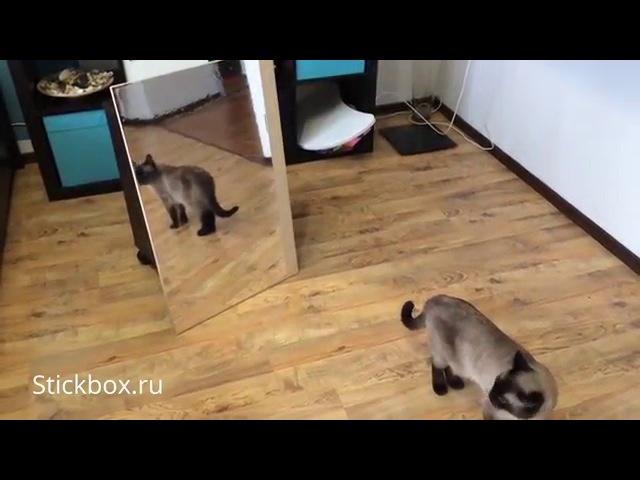 Декоративная зеркальная пленка для стен мебели d c fix 215 0001