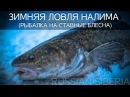 Охота и рыбалка в Сибири. Ловля налима на блесну