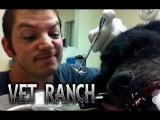 Vet Ranch на русском - Собаки подрались с дикобразом Dogs With Quills