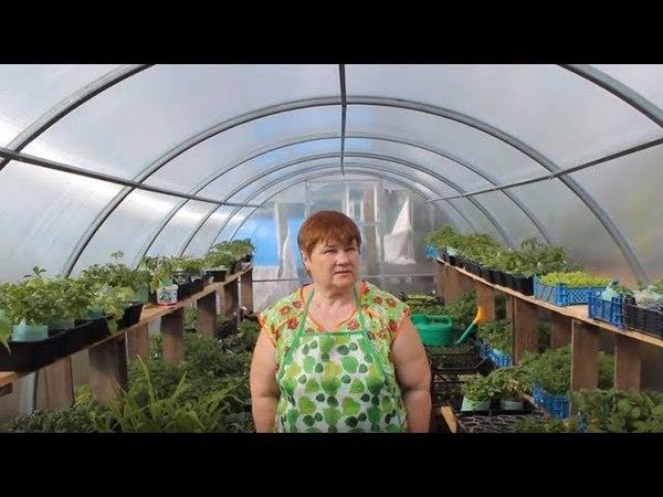 Богатый Урожай Вопреки Погоде Отопление Теплицы