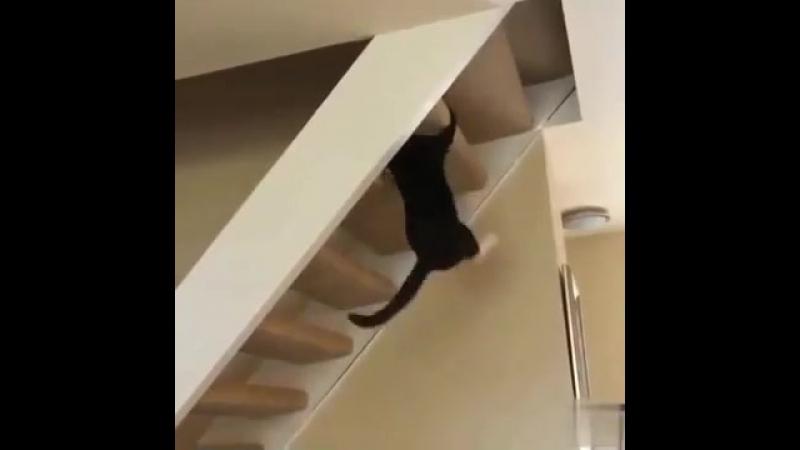 Кошка недовольна гравитацией