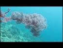А под водой цветы необычайной красоты Трейлер Павел и Татьяна Макаровы