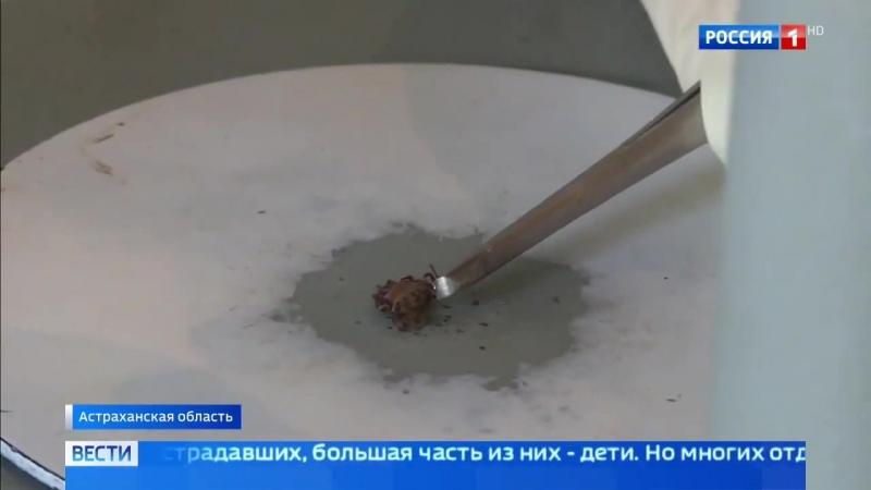 Россия 24 - Сезон клещей: как уберечься от последствий укуса насекомого - Россия 24