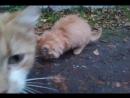 котики с подвала
